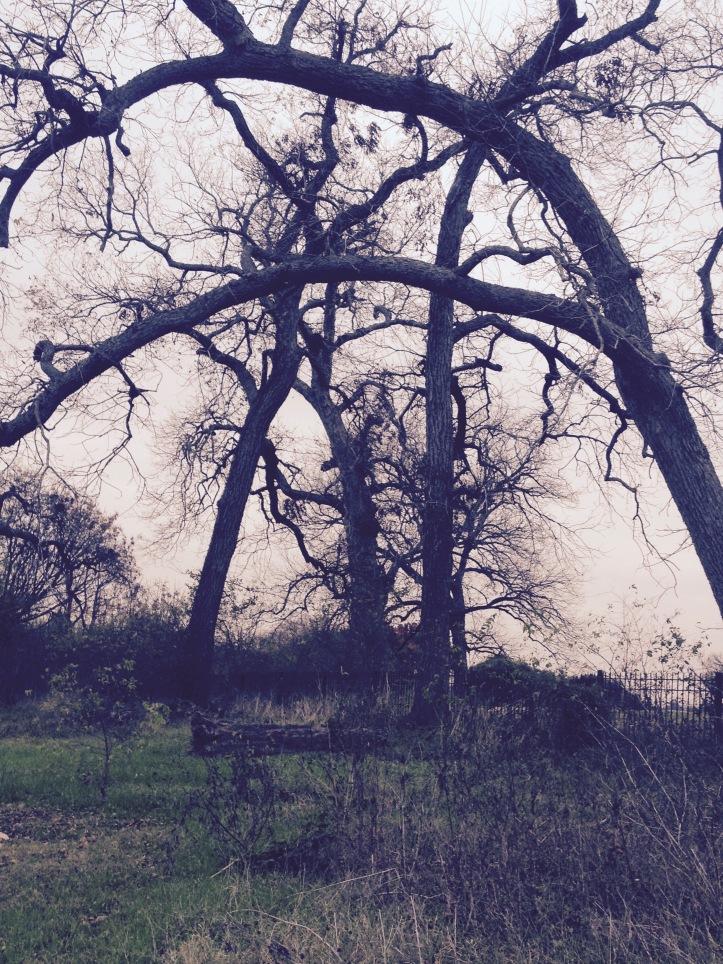 WintersTrees
