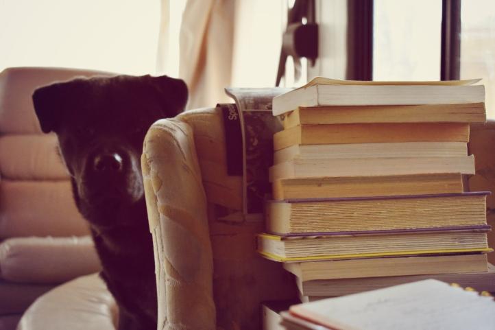 DogandBooks